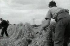 Landbouw vroeger